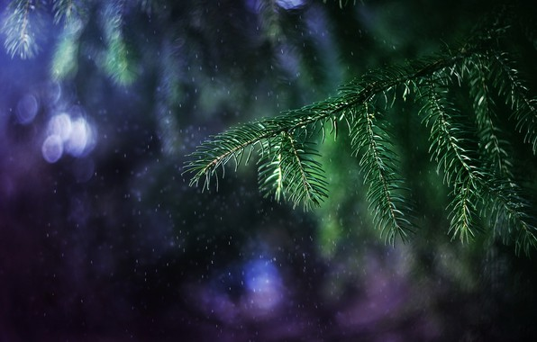 Picture light, branches, rain, tree, branch, bokeh