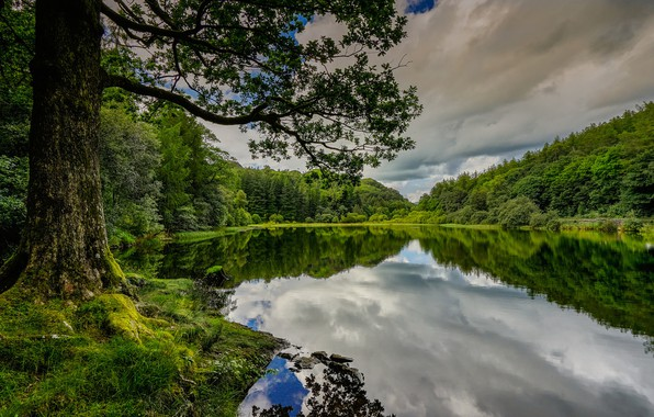 Picture forest, summer, lake, reflection, tree, England, England, The lake district, Lake District, Cumbria, Cumbria
