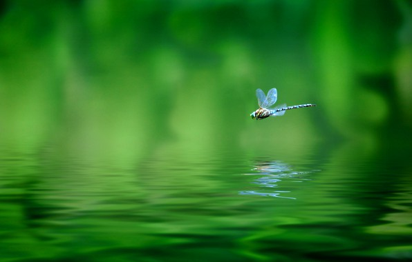 Picture macro, flight, nature, tropics, speed, dragonfly, blur, nature, bokeh, dragonfly, East, province, Indonesia, Java, travel, …