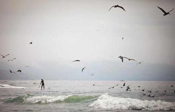 Picture sea, birds, people