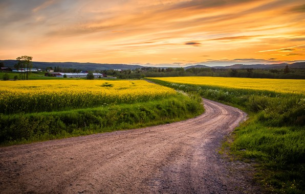 Picture road, field, the sky, sunset