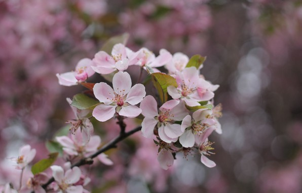 Picture flowers, branch, spring, flowering