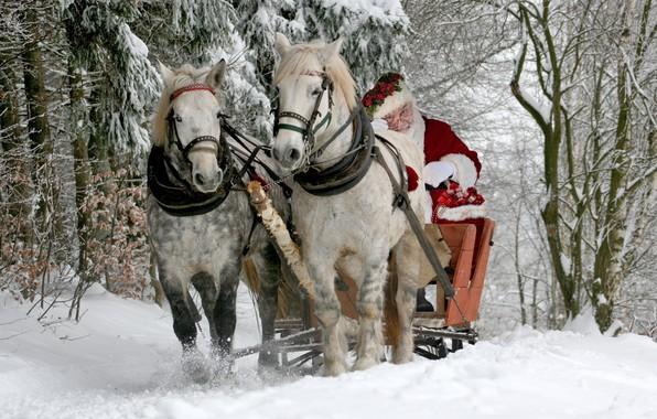 Picture winter, forest, snow, horses, horse, sleigh, Santa Claus, Santa Claus