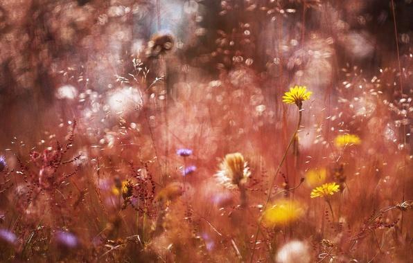 Picture grass, macro, flowers, treatment, bokeh