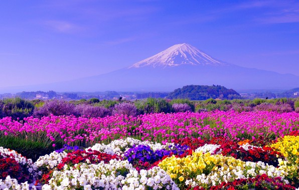 Picture Flowers, Japan, Wallpaper, Landscape, Mount Fuji