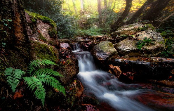 Picture forest, nature, stream, stones, fern