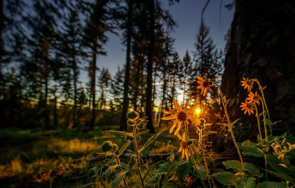 Picture forest, flowers, dawn, morning