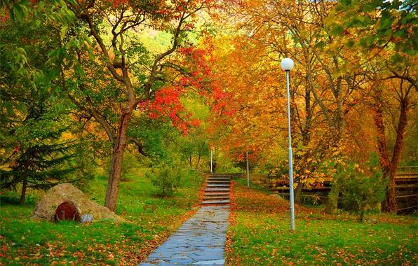 tree path track leaves - photo #30
