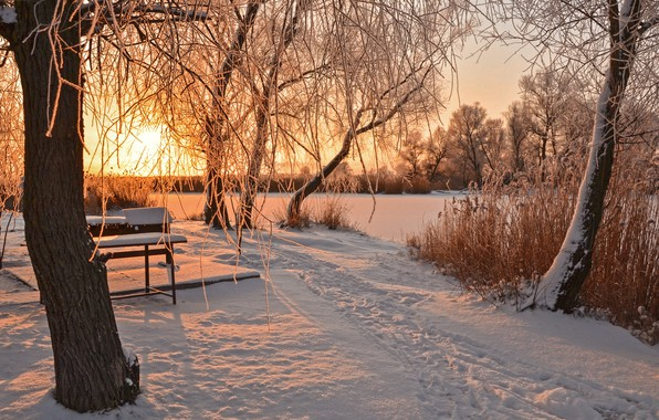 Picture winter, the sun, snow, trees, bench, traces