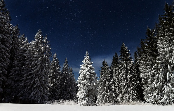Picture forest, the sky, stars, snow, night, nature