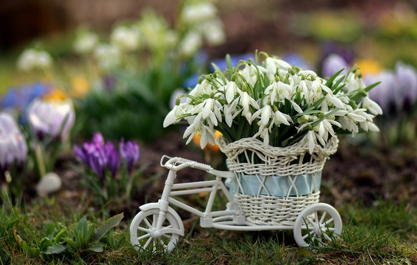 Picture bike, Flowers, Spring, Snowdrops