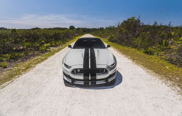 Picture Mustang, Ford, Front, Cobra, Face, Silver