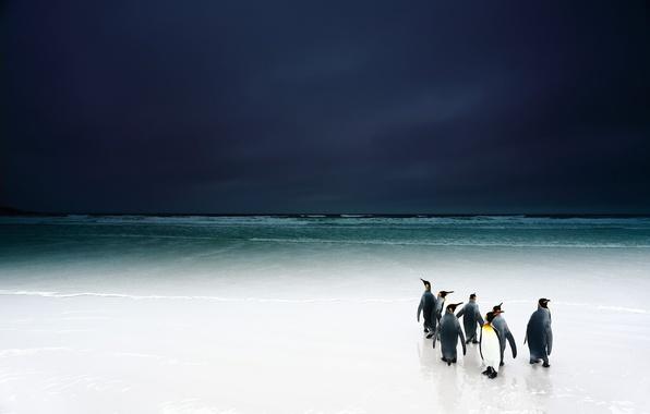 Picture beach, the sky, birds, the ocean, penguins