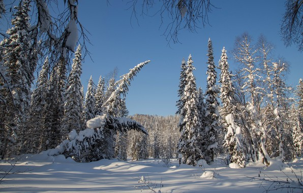 Picture winter, forest, snow, trees, ate, Russia, taiga, Siberia