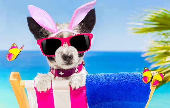 Photo Wallpaper Beach Butterfly Dog Glasses Happy
