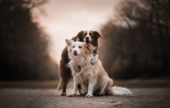 Picture road, dogs, friends