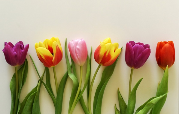 Picture flowers, bouquet, colorful, tulips, wood, romantic, tulips, gift