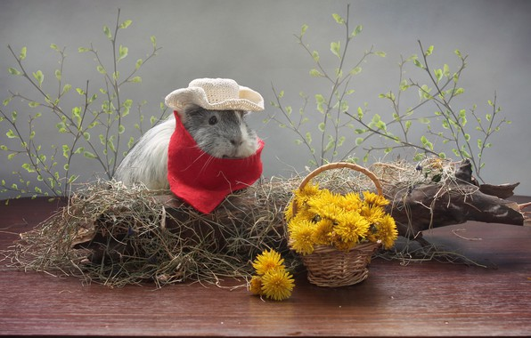 Picture flowers, background, tree, Guinea pig, dandelions, saloma