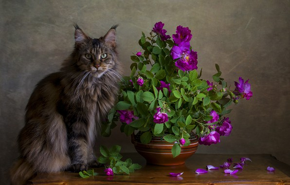 Picture cat, portrait, briar
