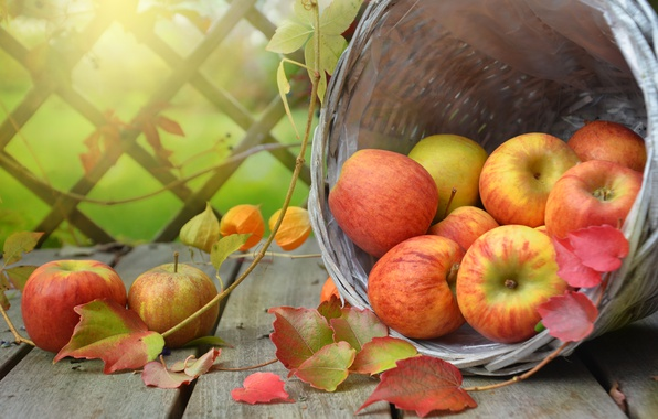 Photo wallpaper leaves, branches, basket, apples, Board, fruit, fruit, physalis