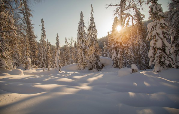 Picture winter, forest, snow, trees, ate, the snow, Russia, taiga, Siberia