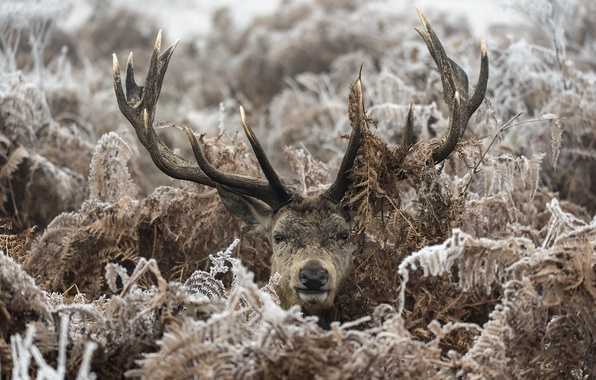 Picture winter, forest, deer, ferns