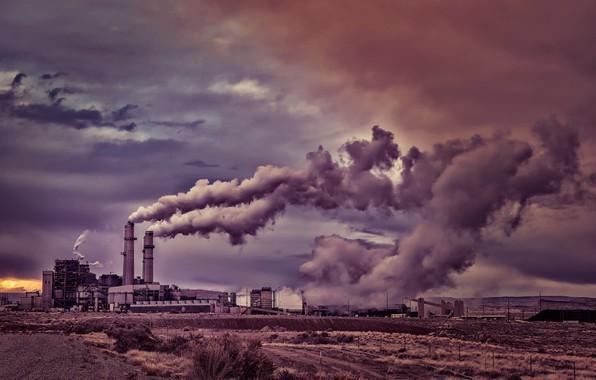 Picture pipe, plant, smoke