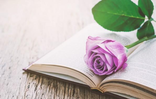 Picture flowers, roses, book, love, vintage, flowers, romantic, purple, book, roses, violet