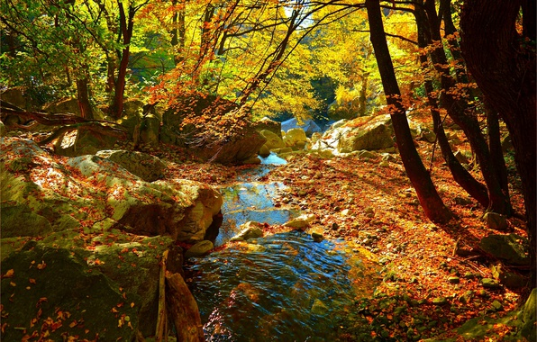 Picture Stream, Autumn, Forest, Stream, Fall, Foliage, Autumn, Colors, Forest, Leaves, Flow