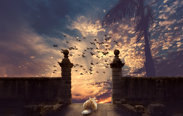 Picture cat, the sky, cat, sunset, birds, Palma, photoshop