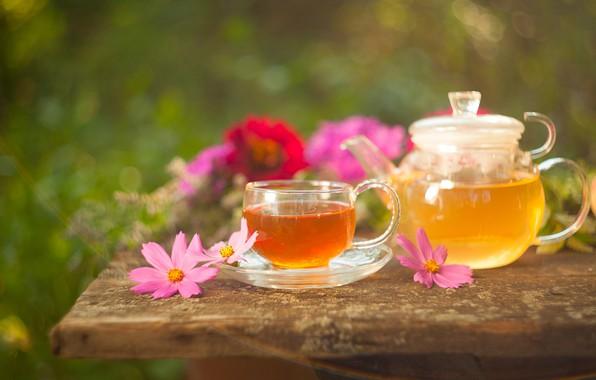 Picture flowers, tea, kettle, drink, kosmeya