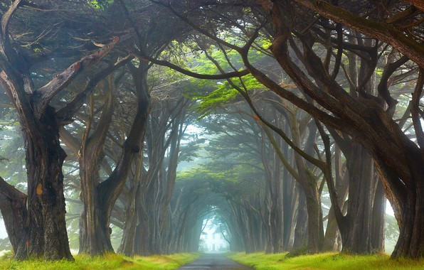 Picture grass, road, trees, landscape, nature, leaves, tunnel, Ireland, branches, mist, trunks