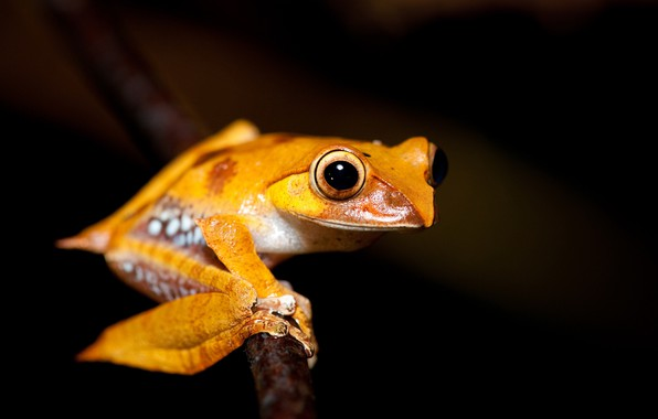Picture nature, background, frog