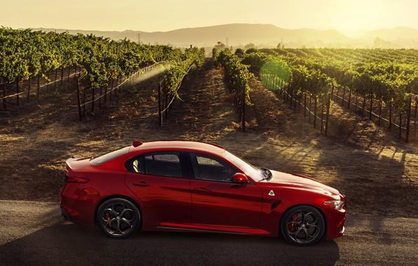 Picture Alfa Romeo, Four-leaf clover, red car, Giulia, 2017