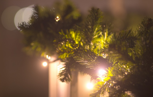 Picture background, holiday, tree