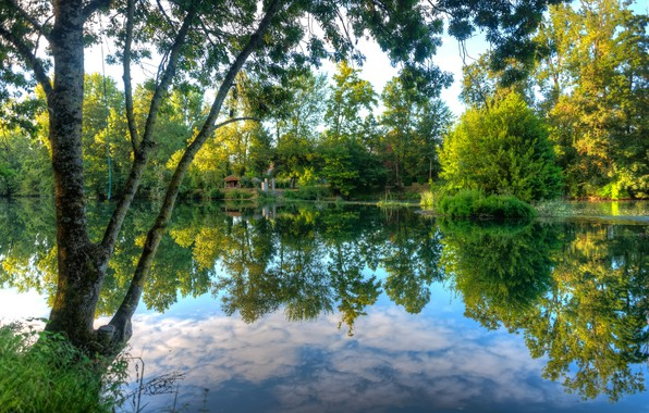 Picture Reflection, Lake, Trees