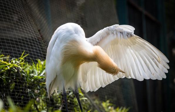 Picture bird, birds, animal, malaysia, kuala lumpur, bird park