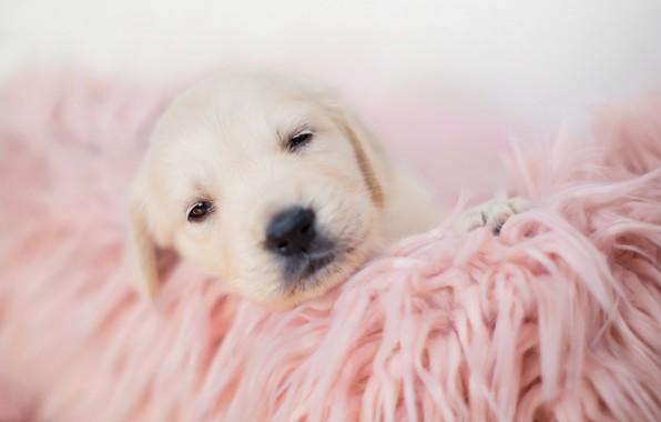 Picture sleep, baby, blanket, puppy