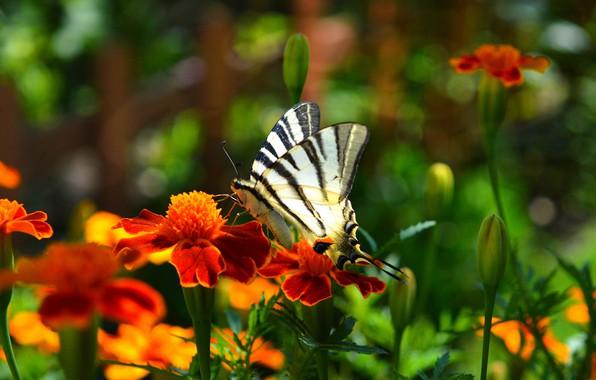 Picture flowers, Macro, Butterfly, Flowers, Macro, Butterfly