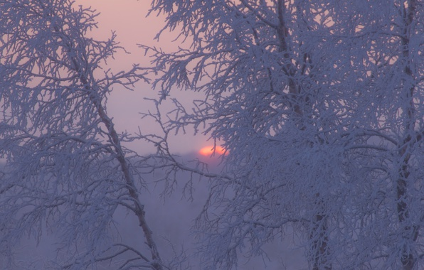 Picture winter, frost, trees, sunset, branches, Sweden
