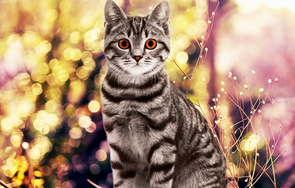 Picture background, cat, cat