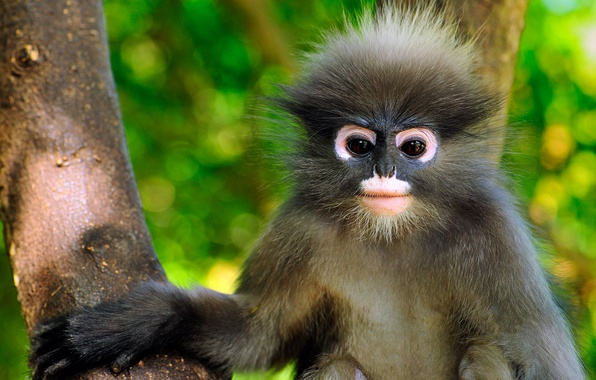 Picture Thailand, the primacy of, eyeglass encotel, Khao Sam Roi Yot National Park