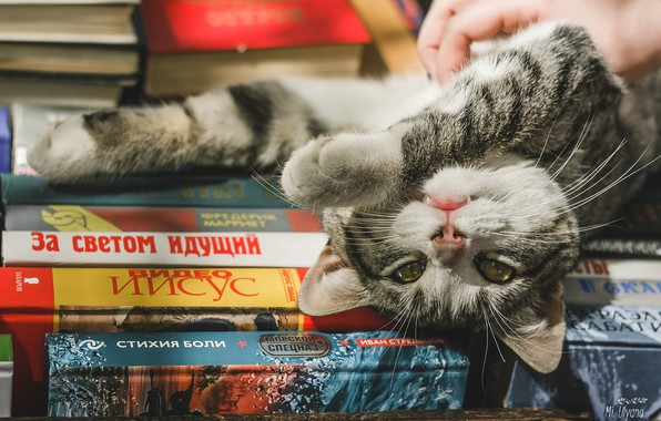 Picture cat, look, books, legs, muzzle, cat, Juliana Mizinova