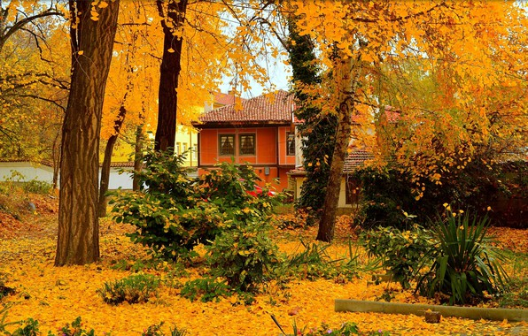 Picture Autumn, Trees, House, House, Fall, Foliage, Autumn, Trees, Falling leaves, Leaves