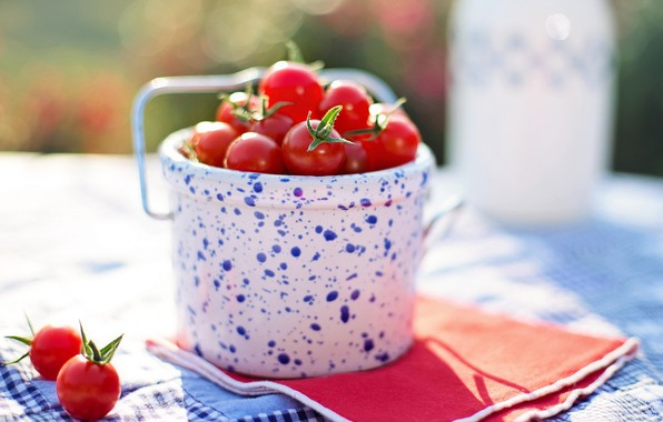 Picture tomatoes, tomatoes, bucket, cherry