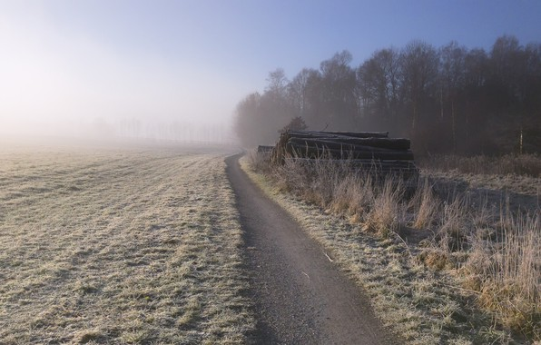 Picture frost, field, fog