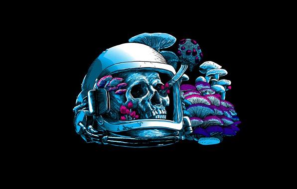 Picture mushrooms, skull, helmet