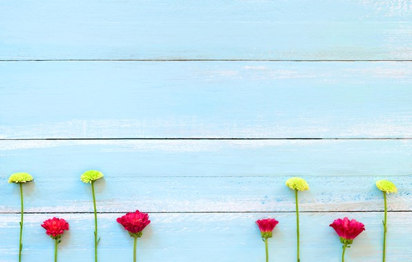 Photo wallpaper flowers, background, tree, Board, colorful, chrysanthemum, wood, texture, blue, flowers, background, wooden