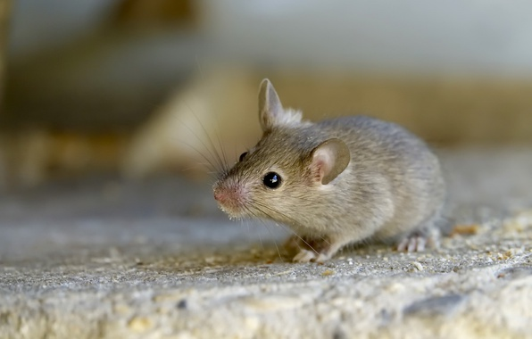 Picture macro, background, mouse