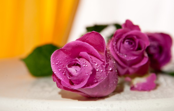 Picture drops, flowers, yellow, background, roses, bouquet, pink, buds, blurred